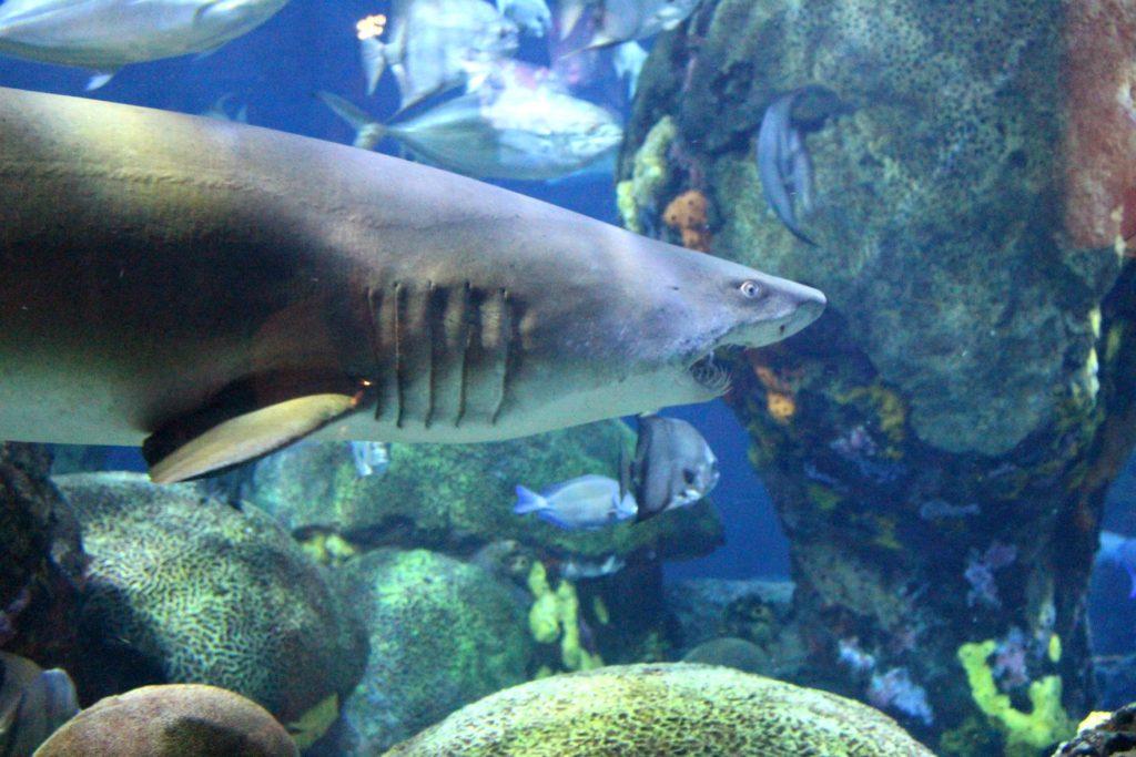 chattanooga aquarium